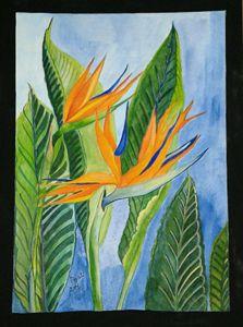 Natural beauty - Bird-of-Paradise - Piyali Mitra