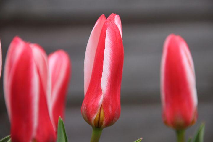 Flower - Derek Leathlean