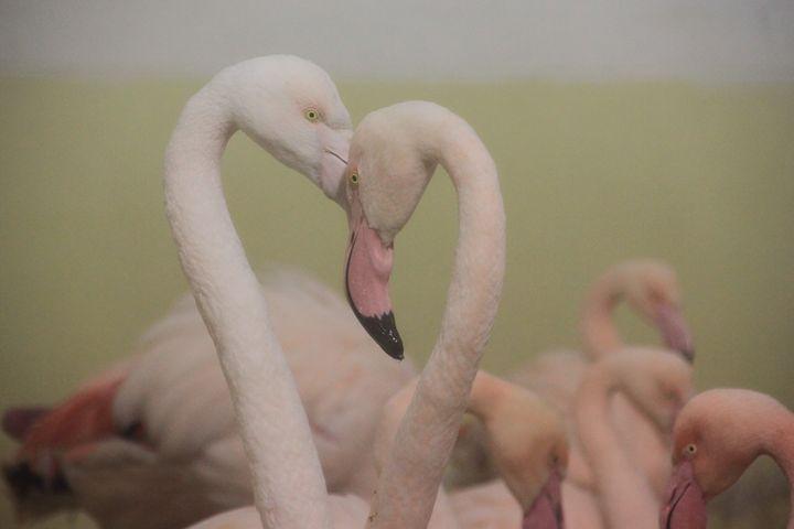Flamingo - Derek Leathlean