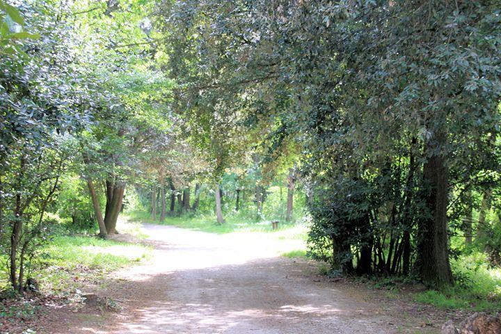 Woodland Path - Derek Leathlean