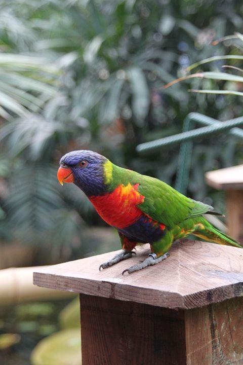 Parrot - Derek Leathlean