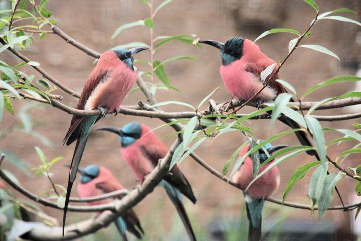 Birds - Derek Leathlean