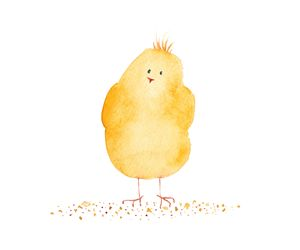 Little funny yellow chicken