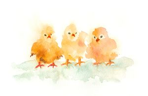 Three little chickens