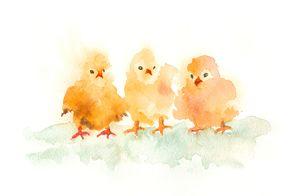 Three little chickens