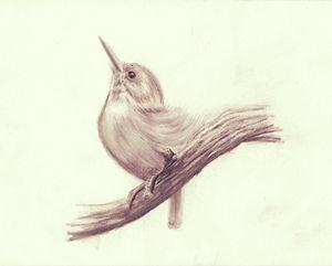 Hummingbird - Gregory J Farrugia