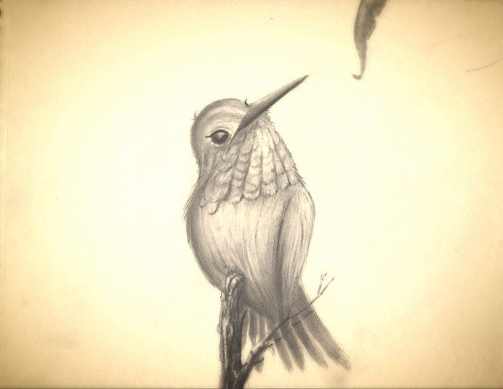 Contented Hummingbird - Gregory J Farrugia