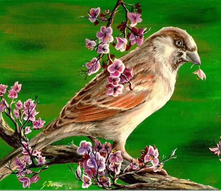 Sparrow - Gregory J Farrugia