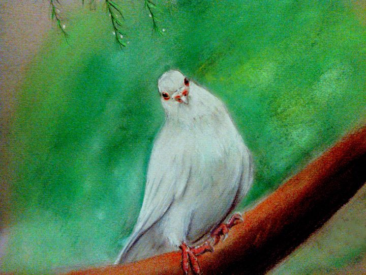 White Dove - Gregory J Farrugia