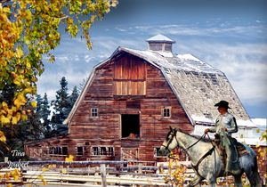 Cowboy checking the barn