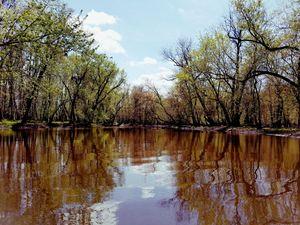 Passaic River Springtime