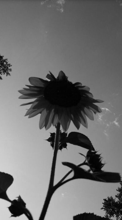 The Sunflower - GuytoniousPhoto