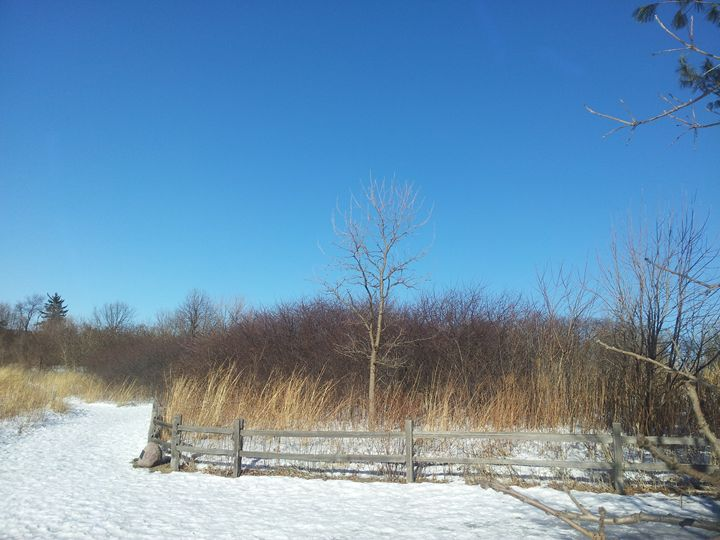 winter in the farm - Mariya Doroseff