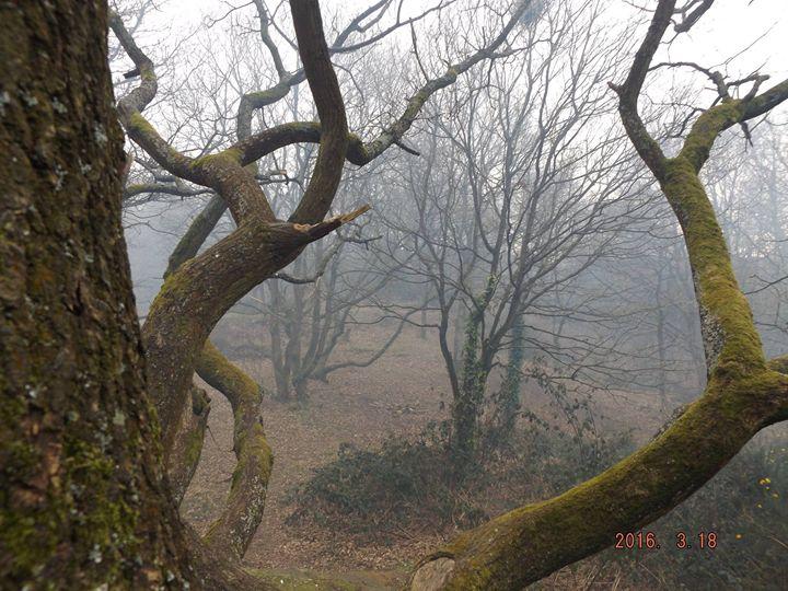 Smoky trees - Michelle Gardiner