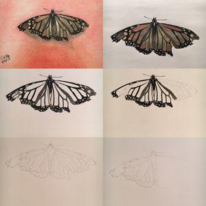 Butterfly Progress - Calvin Wayne Robinson