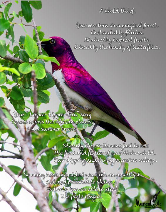 violet thief - Marcel ink