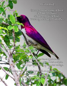 violet thief