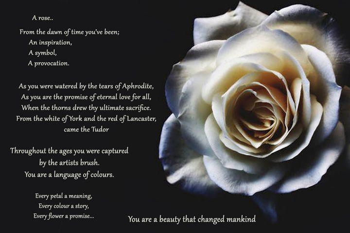 A rose - Marcel ink