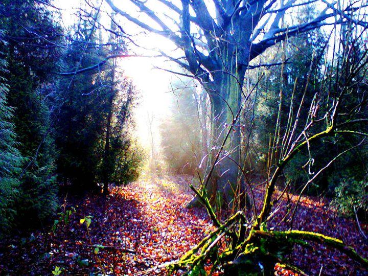 Sunburst through the Tress - John-Baroque