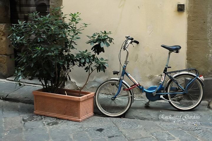 Italian Blue Bike - Enchanted Gardens Photography