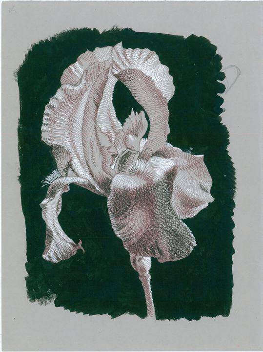 Iris - Lilla Duva