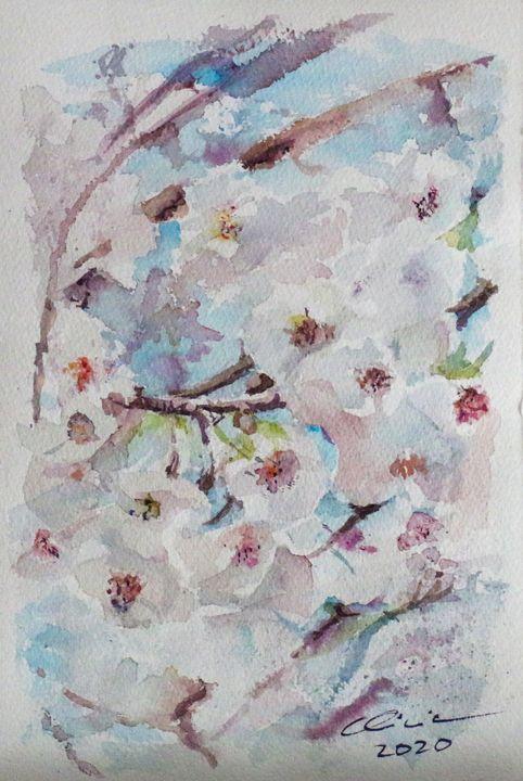 Flores de cerezo - Alicia Prado