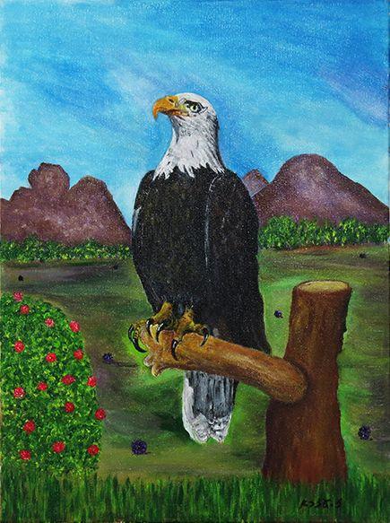 Bald Eagle - Ezra Zaarur