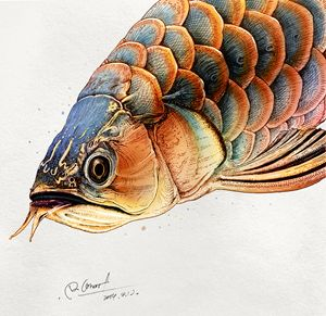 Osteoglossidae - Rlon