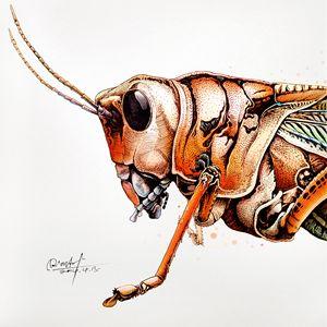 Grasshopper - Rlon