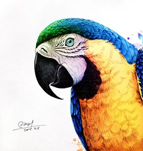 Macaws - Rlon