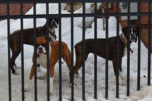 Tha Dogs - The Incubator