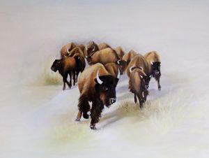 Bison stampede