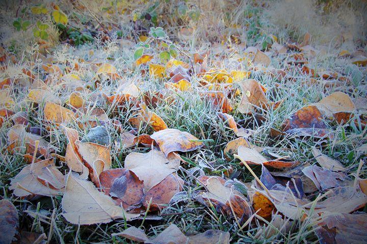Leafy Floor - Bijou