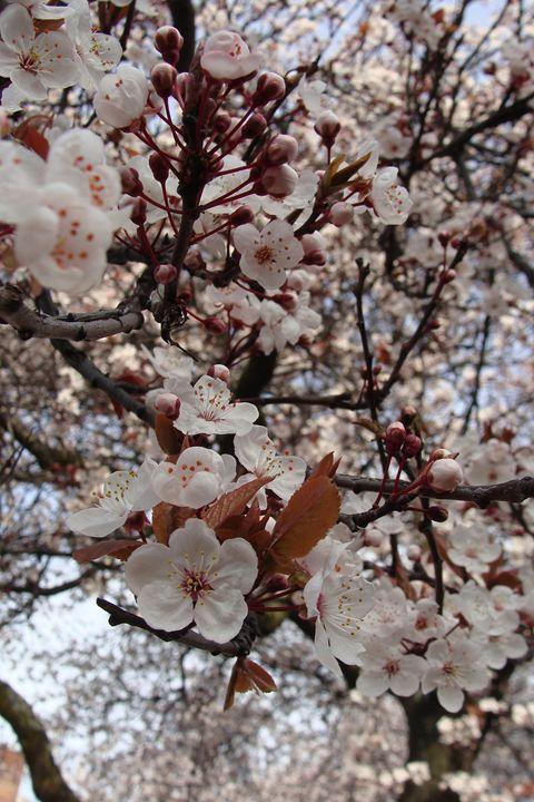 Beefy Blossom - Bijou