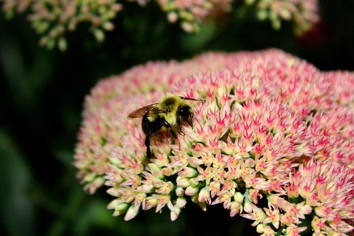 Bee - Courtney