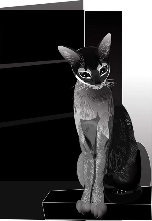 black and white cat - rtistry digital