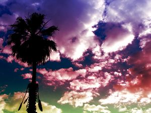Palm Tree Candy Sky