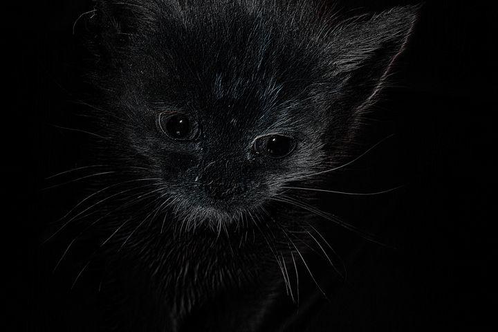 Star-cat - Carl