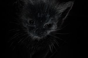 Star-cat