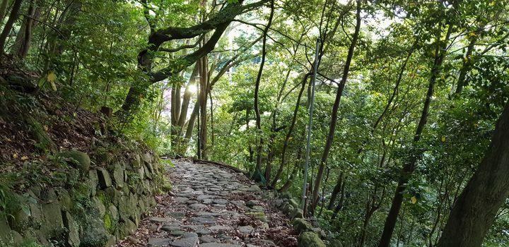 Hakone path - Tiago Ferreira