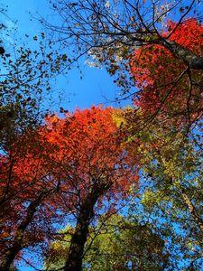 Blaze of Autumn