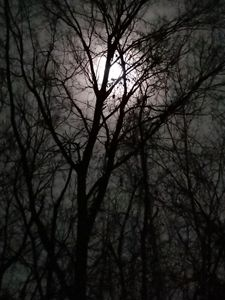 Moonlit branches