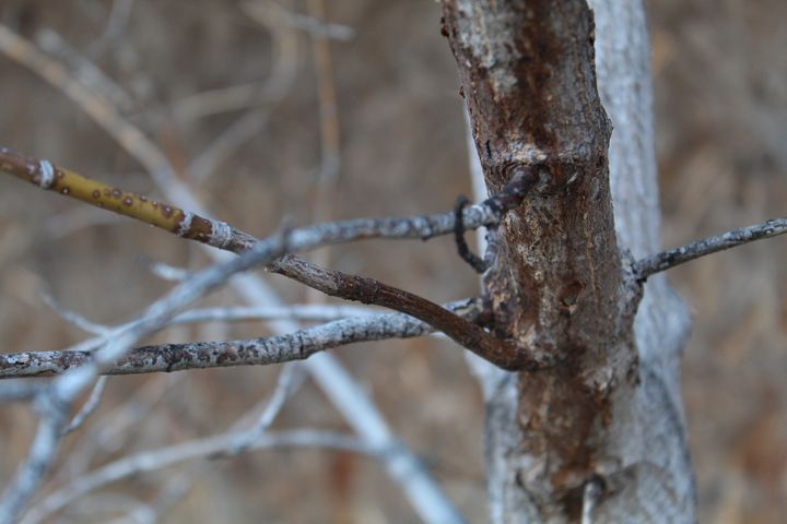 Branch close-up - Kanemoon