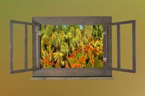 Desert Botanicals