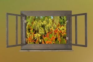 Desert Botanicals - Behind the Shutter Photography