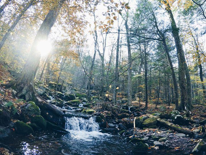 Creek in the woods - Wanderlust