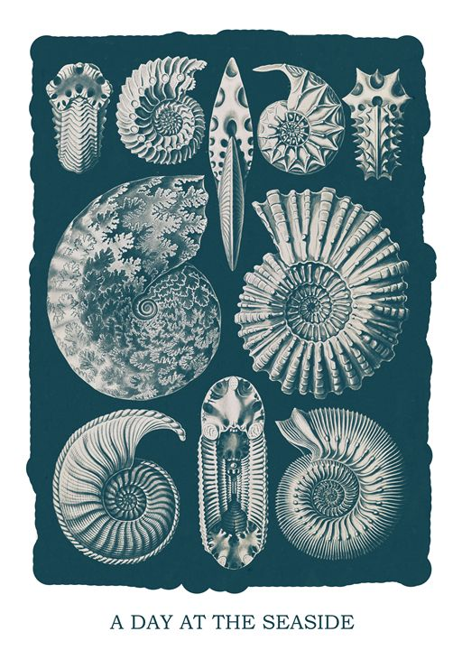 A day at the seaside Ernst Haeckel - Liszt Collection