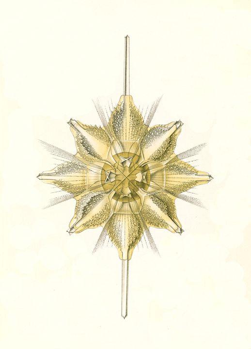 Marine animals by Ernst Haeckel - Liszt Collection