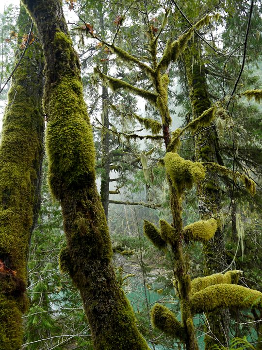 Heavy Moss on the Cowichan River - Photology Photography