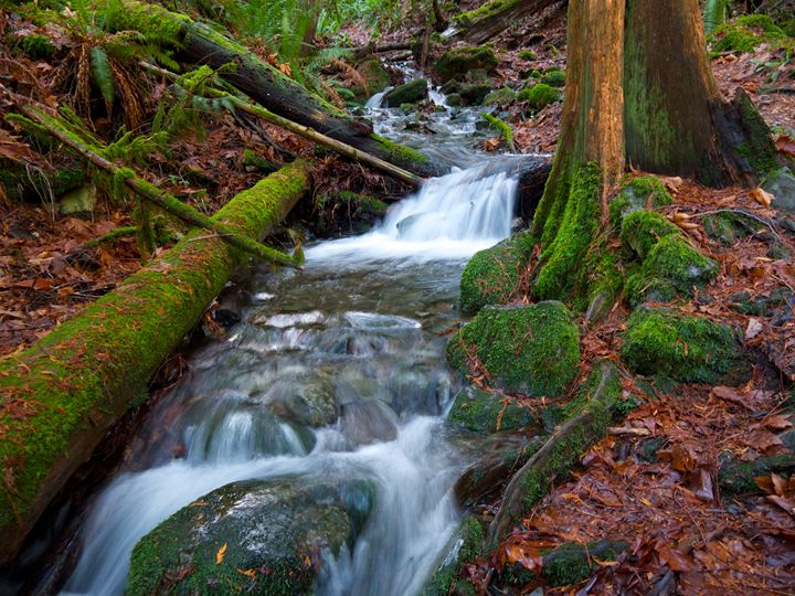 Mt. Finlayson,Vancouver Island, B.C. - Photology Photography